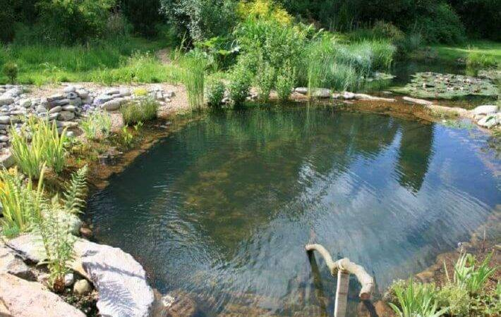 Natural Pools Swimming Ponds Insteading