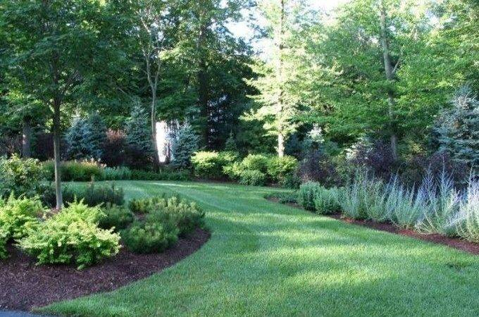 Natural Privacy Fences Shrubs Trees Yard Landscaping