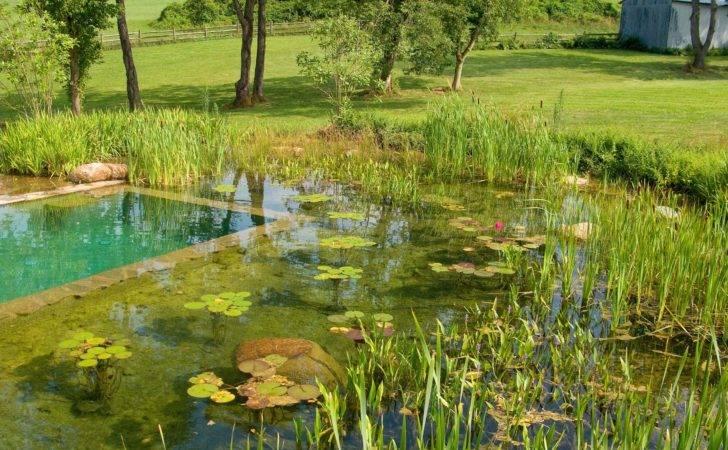 Natural Swimming Pool Aqua System