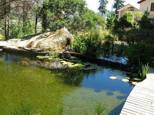 Natural Swimming Pool Rainharvest