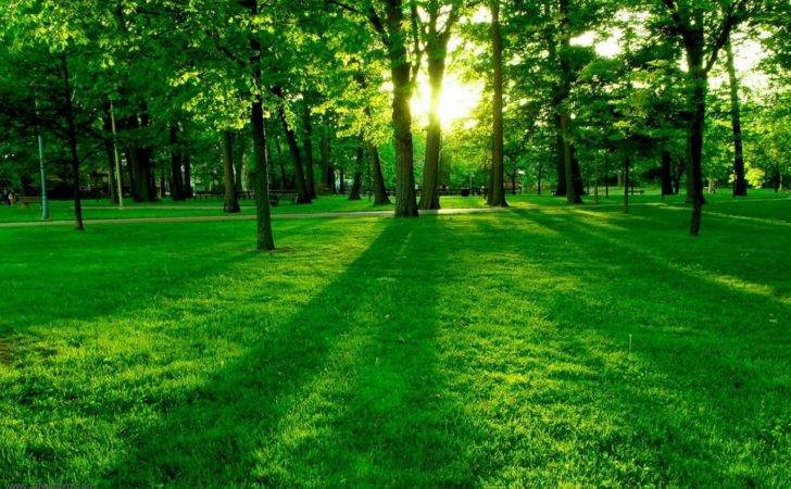 Nature Most Beautiful Collections Green Trees