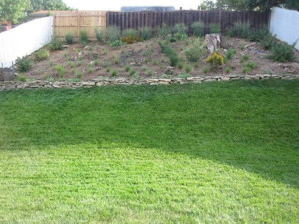 Need Lay Landscape Fabric Under Ground Cover Plants Prevent