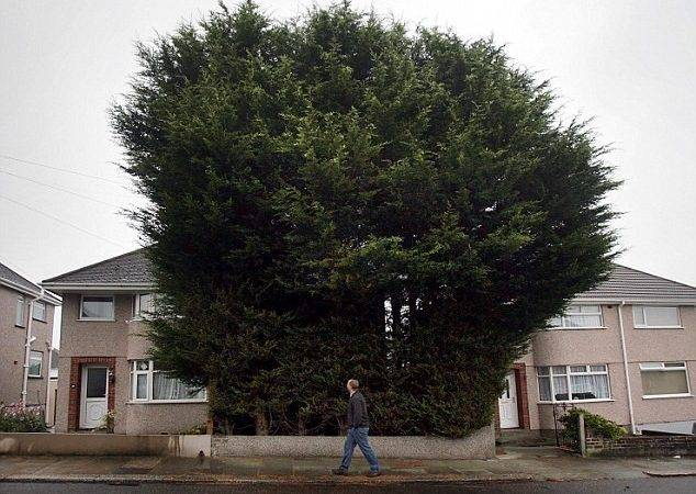 Neighbours Claim Trees Look Horrendous Block Out Sunlight