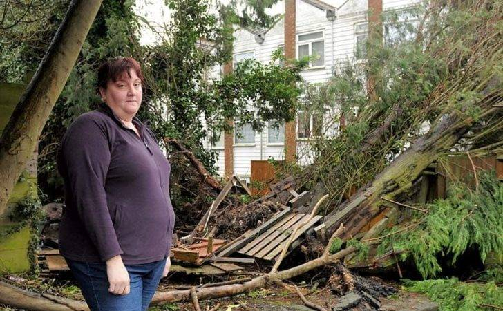 Neighbours Fall Out Over Removal Toppled Tree Telegraph