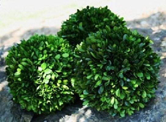 New Preserved Boxwood Balls All Year Round Decor Wedding