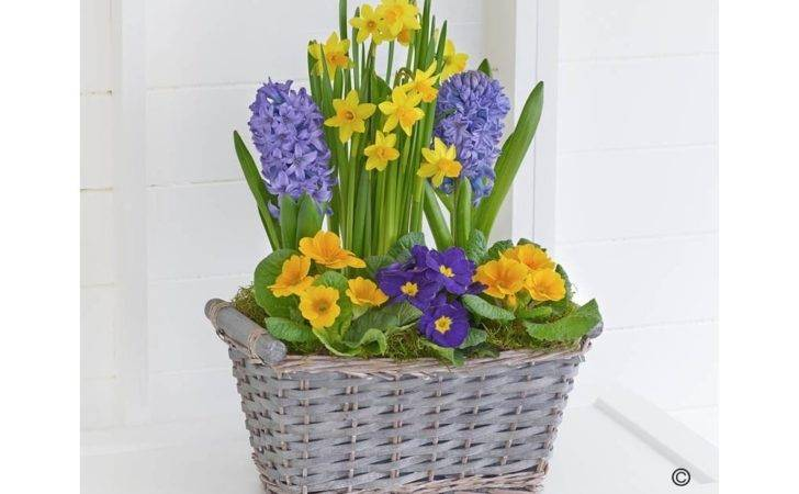 Occasion Spring Easter Flowers Classic Planter