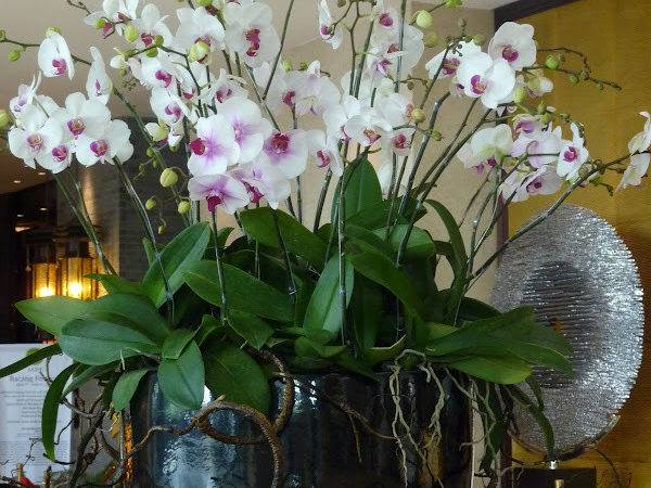 Orchid Arrangement Hotel Lobby Garden Flowers