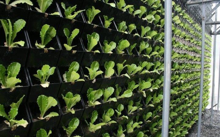Origin Vertical Garden Living Wall