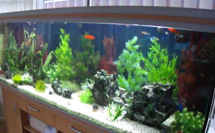 Our Tropical Fish Tank Youtube