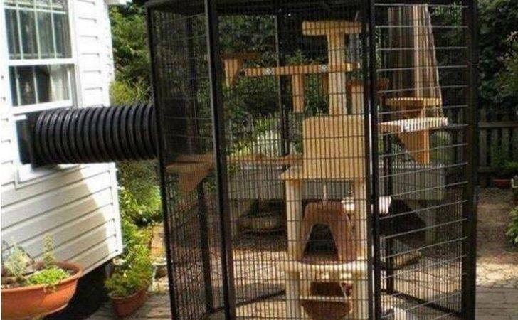 Outdoor Cat Enclosure Pinterest Room