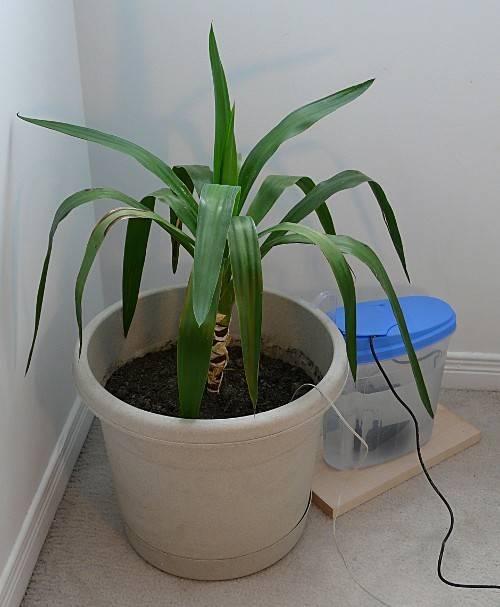 Palm Trees House Plants Look Like