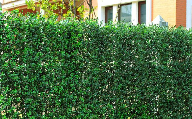 Pcs Boxwood Panel Artificial Grass Plant Outdoor Hedge