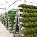 Pegasus Agritech Commercial Hydroponics Pinterest Gardens Each