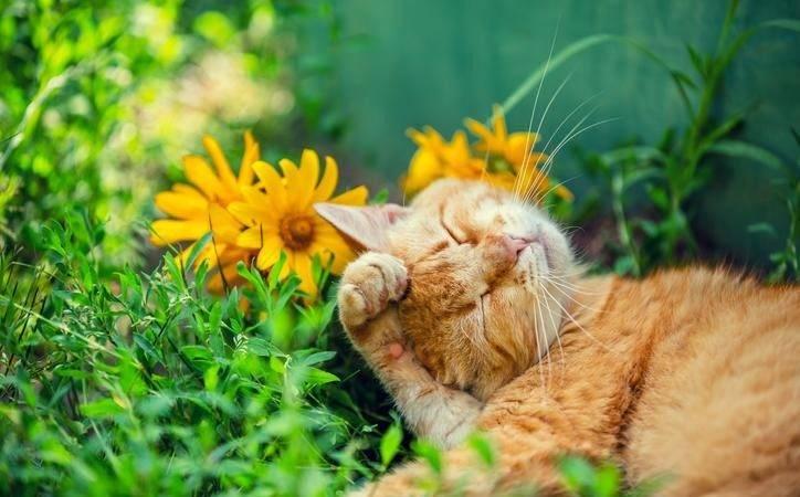 Pet Friendly Flowers Plants Safe Around