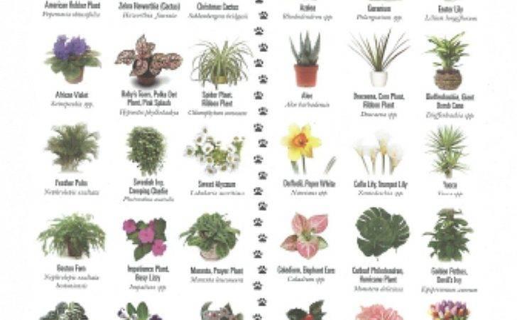 Pet Friendly Plants Toxic Pets