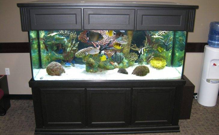 Pics Photos Fish Tank Design Ideas