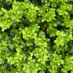 Pics Photos Green Leaves Texture High Pixels Large