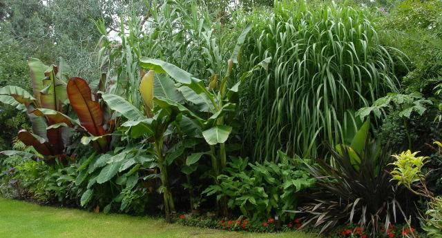 Pics Photos Tropical Garden Landscape Cool Plants Pic