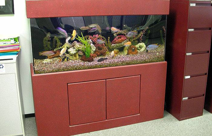 Pin Home Aquarium Design Pinterest