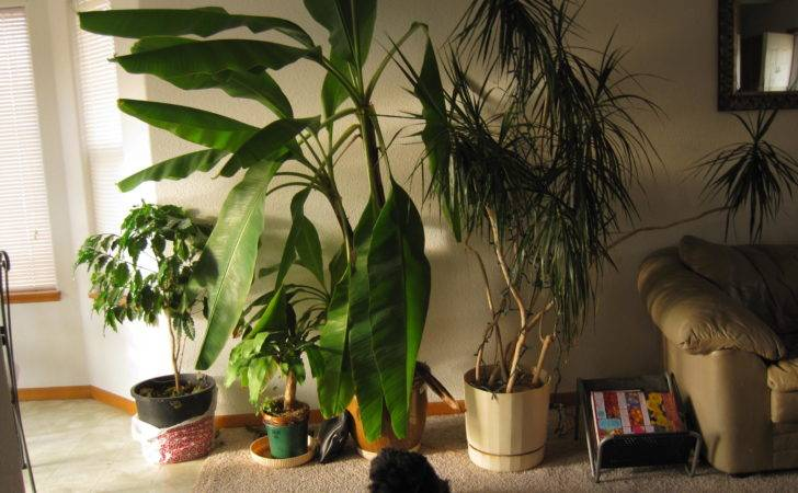 Pin Tropical House Plants Identification Search Results