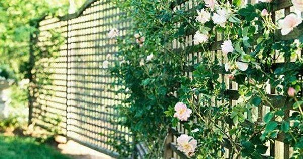 Plant Fence Ideas Favorite Places Spaces Pinterest