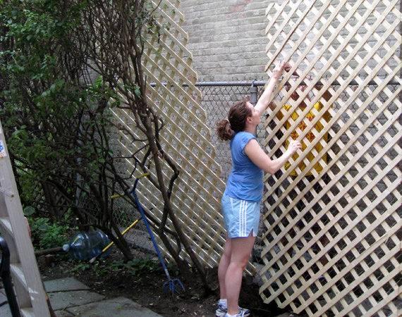 Plant Fence Ideas Garden Design Metal