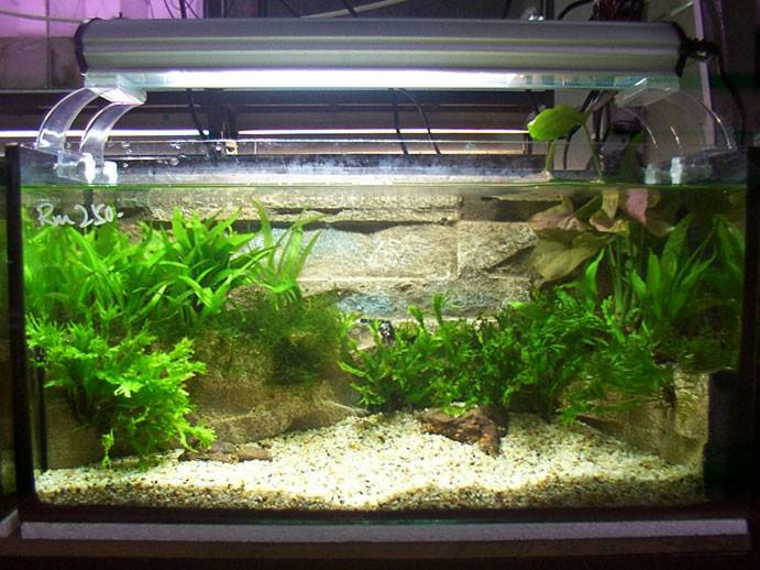 Plant Landscape Aquarium Design Item Include Lighting Plantation