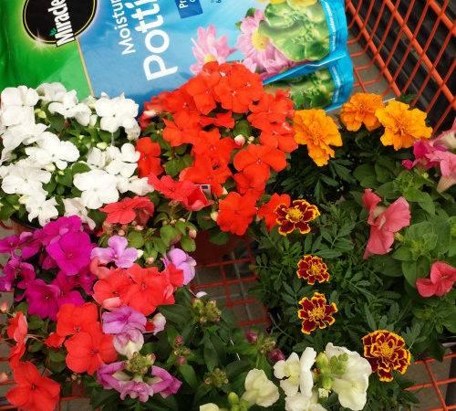 Plant Pet Friendly Garden Beagles Bargains