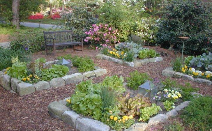 Plant Your Vegetable Garden Hgtv