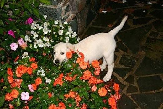 Planting Dog Friendly Garden Dengarden