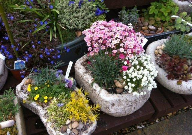 Planting Our Latest Collection Colourful Spring Planters
