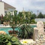 Planting Yucca All Around Pool Area Garden Pinterest