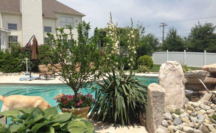 Planting Yucca All Around Pool Area Garden Pinterest