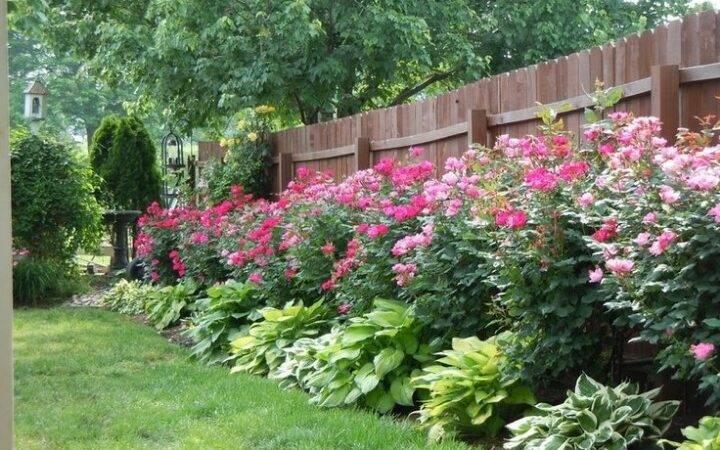Plants Along Fence Rose Garden Design Landscaping Ideas