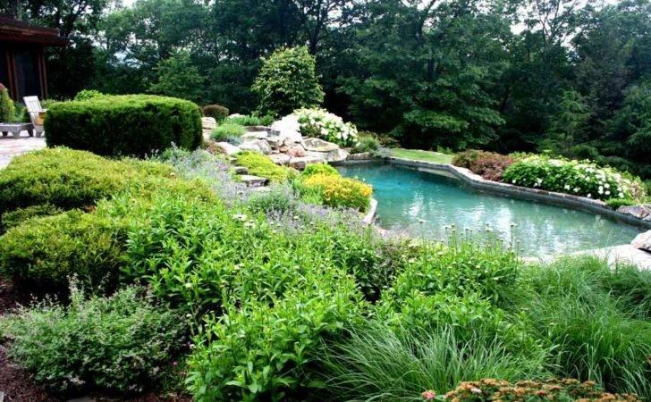 Plants Around Pool George Landscaping