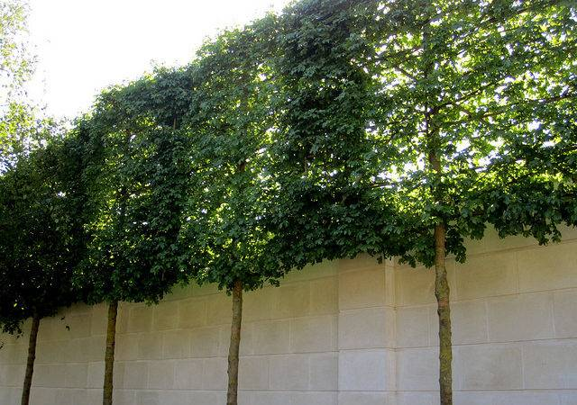 Plants Boost Your Curb Appeal Shade Blog
