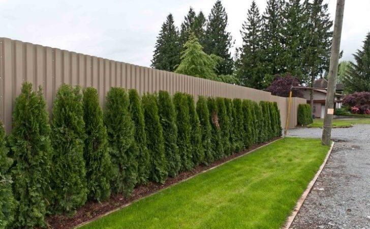 Plants Fences Fence Designs Ideas