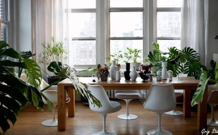 Plants Greenery Your Interior Design Youtube