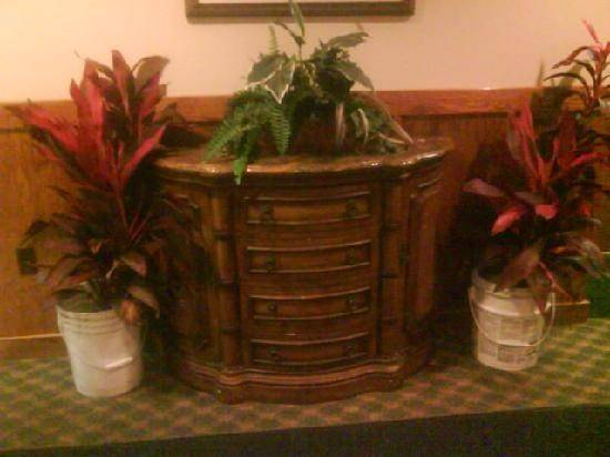 Plants Hotel Lobby Planted Chemical Buckets