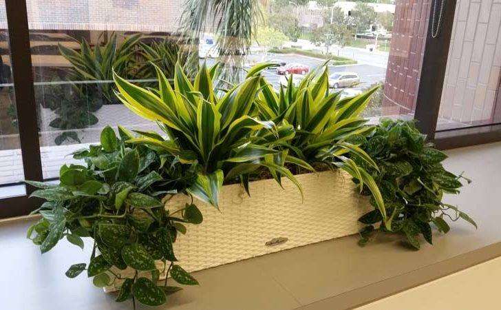Plants Interior Design Best Home