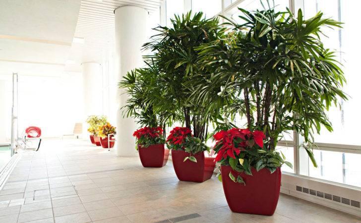 Plants Plant Services Rentals Phillip Interior