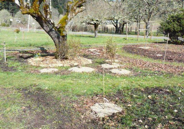 Plants Transplants Light Colored Pea Gravel Mulch Circles