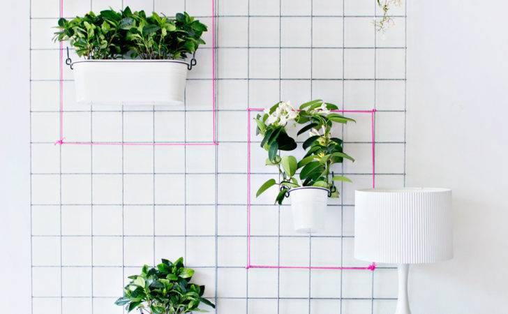 Plants Wall Add Splash Colour Shows Plant