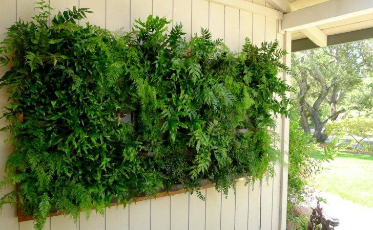 Plants Walls Vertical Garden Systems May