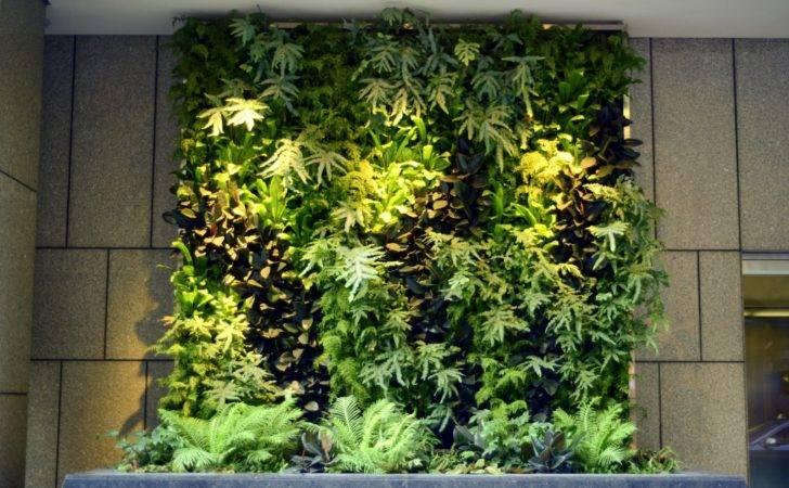 Plants Walls Vertical Garden Systems Months Mature Pine