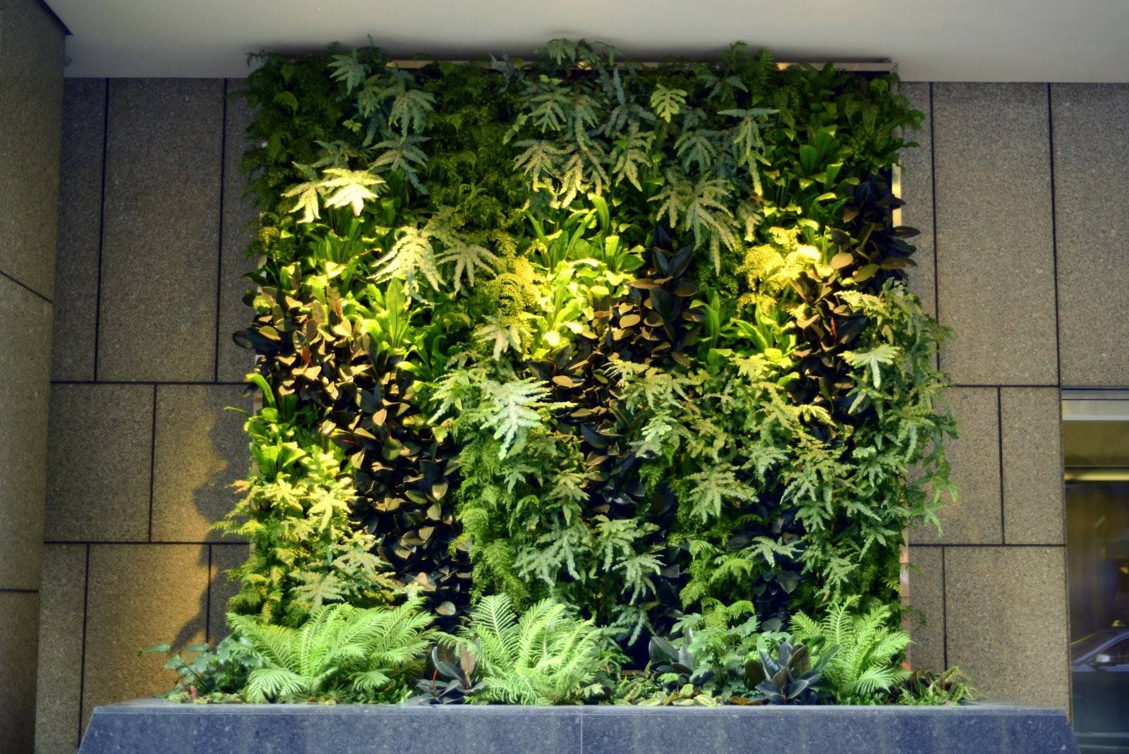 Plants Walls Vertical Garden Systems Months Mature Pine
