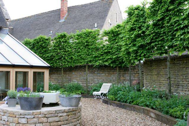 Pleached Trees Instant Hornbeam Beech Lime