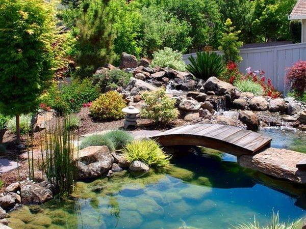 Pond Add Unique Design Elements Make Koi More Attractive