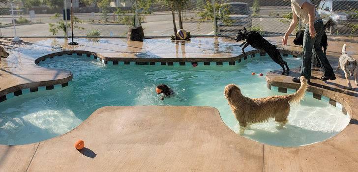 Pools Bone Shaped Pool Dogs Play Cool Off