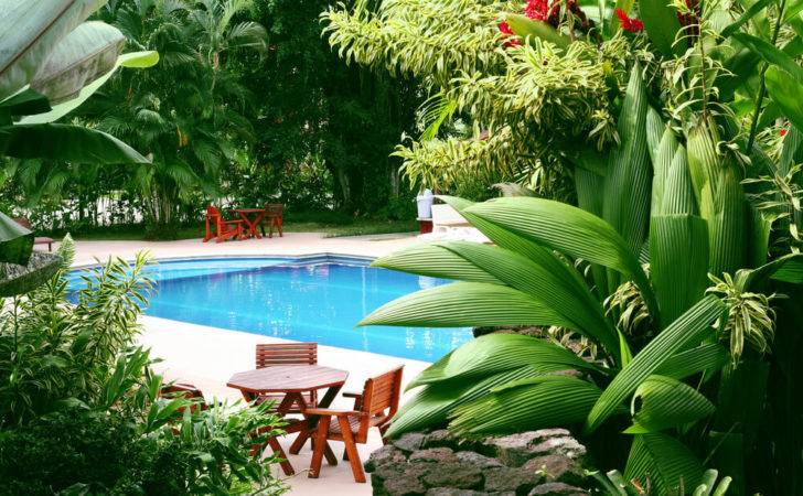 Poolside Plants Pool Landscaping Ideas Your Dallas